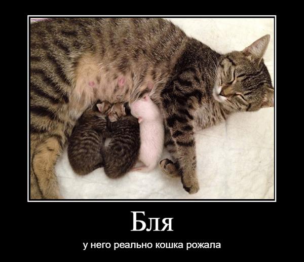 бля, у него реально кошка родила