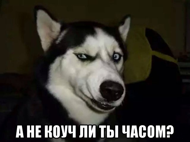 собака лайка