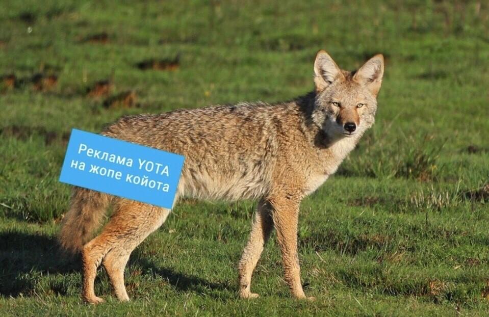 Реклама Йота на жопе койота